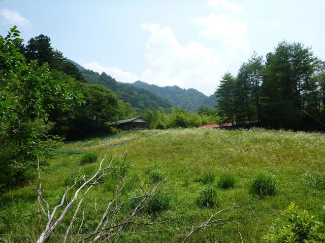 maruyama45.jpg