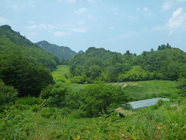 maruyama99.jpg