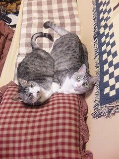 バニラちゃん&ミントちゃん(屋内)