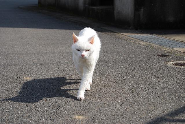 あいちゃんwalking1
