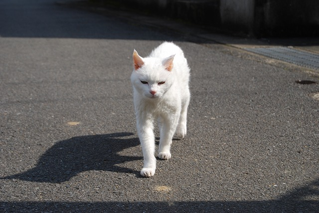 あいちゃんwalking2
