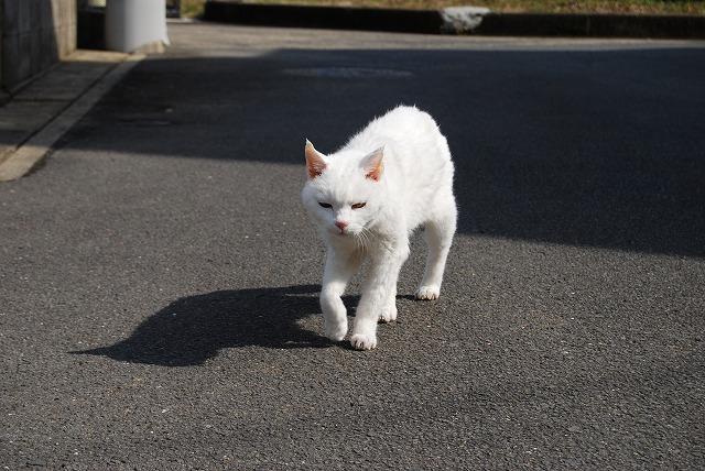 あいちゃんwalking3