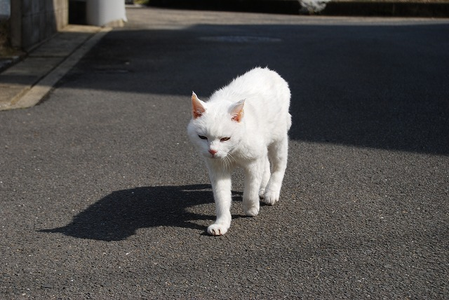 あいちゃんwalking4