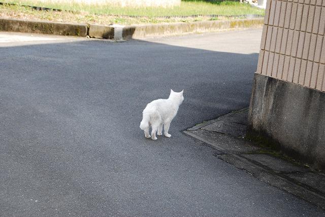 歩こう~♪