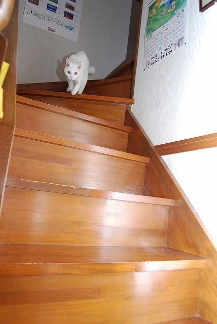 階段を降りるあいちゃん