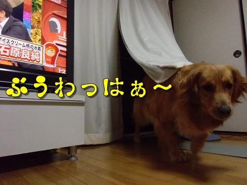 CIMG5981.jpg