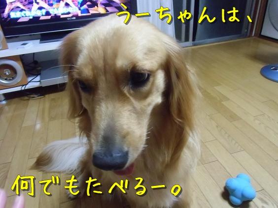 CIMG6795.jpg