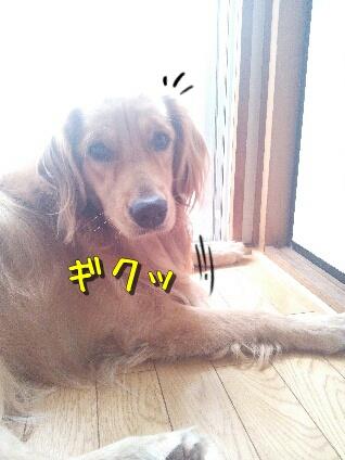 fc2blog_003.jpg