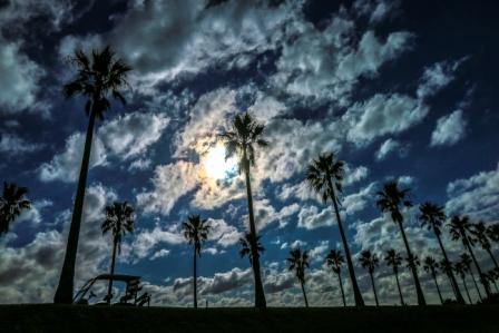 ヤシの木と雲