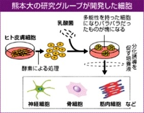 熊本大の開発した万能細胞