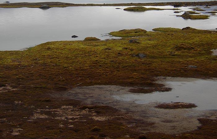 Kongsfjorden_from_Blomstrandhalvoja.jpg