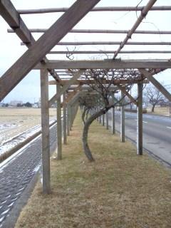 新田散歩7
