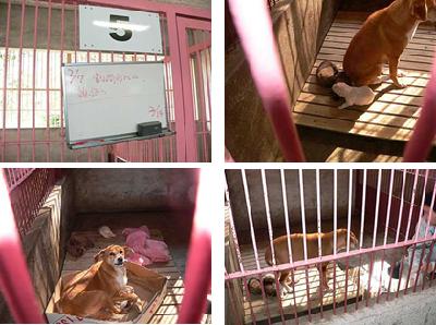 収容所の母子犬