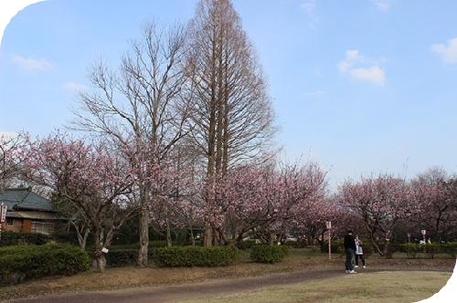 袖ヶ浦公園2