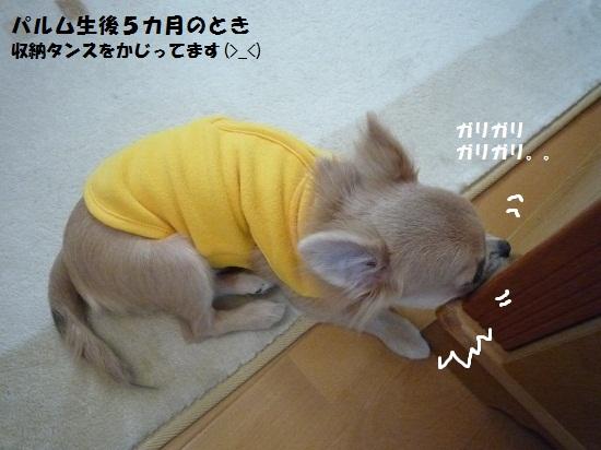 パルムの甘噛み②