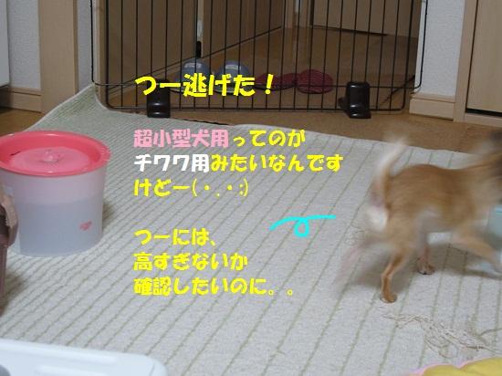 IMG_0107.jpg