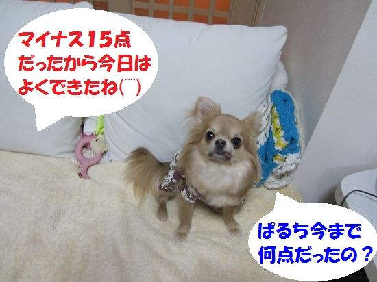 IMG_0394.jpg