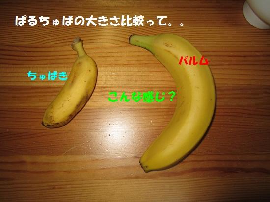 IMG_1035.jpg