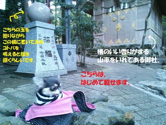 NCM_0065.jpg