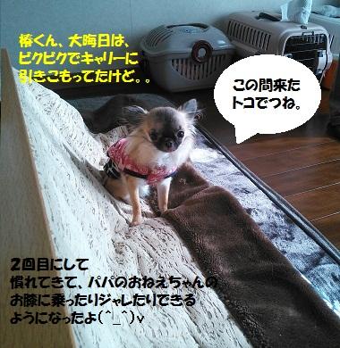NCM_0082.jpg
