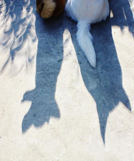 2012年5月21日金環日食とホワイトシェパードテーオとタランティーノ