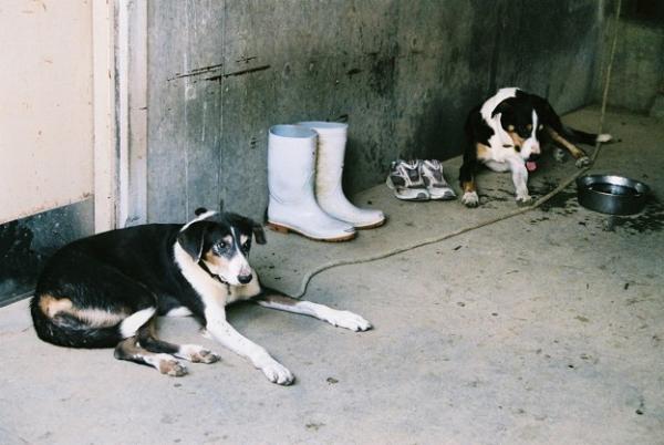 牧羊犬の休憩