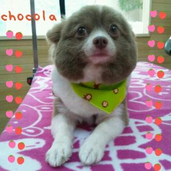 チョコラ5