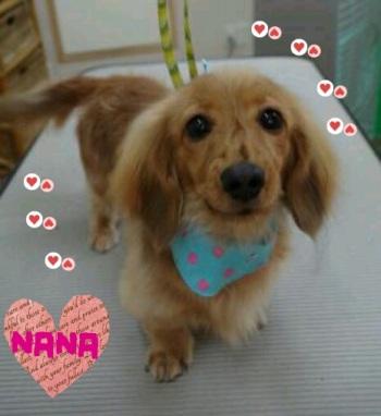 ナナちゃん5