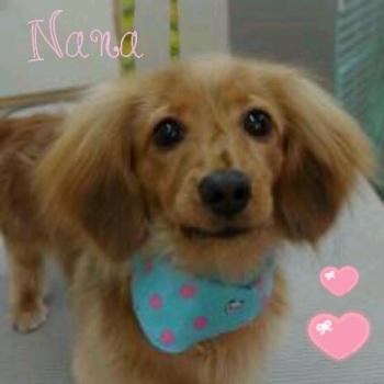 ナナちゃん6