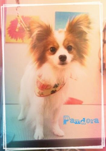 パンドラ11