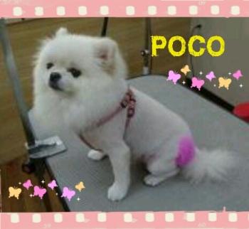 POCO2.jpg