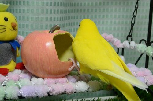 ぽぴとリンゴの容れ物1-1
