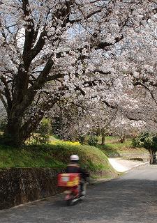 三次桜 055