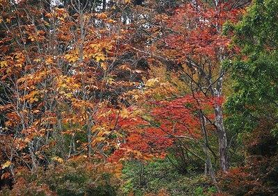 北広島の秋 7
