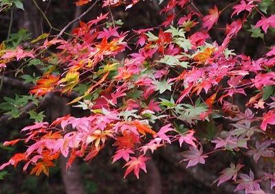 北広島の秋 8