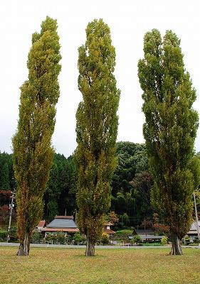 北広島の秋 2