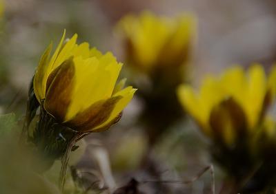 早春の花 3