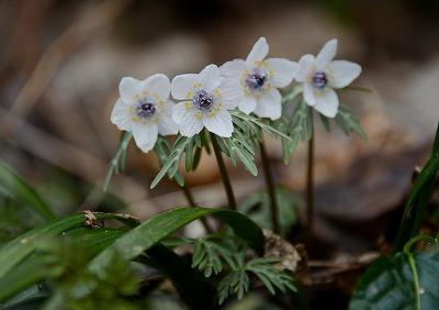 早春の花7