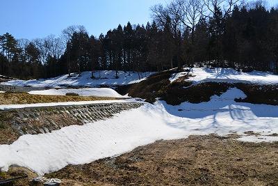 北広の春 8