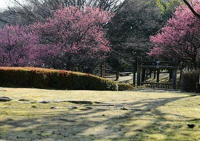 瀬戸の春1