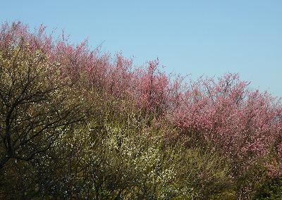 瀬戸の春2