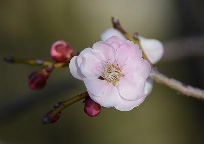 瀬戸の春6