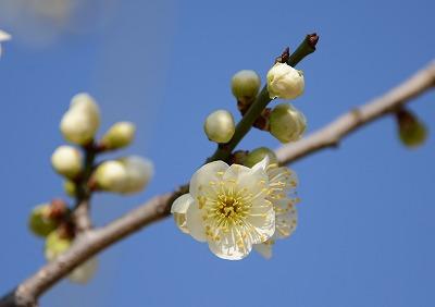 瀬戸の春7