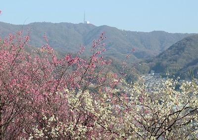 瀬戸の春12