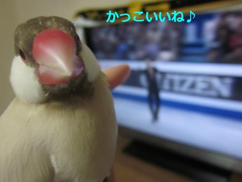 がんばれ~