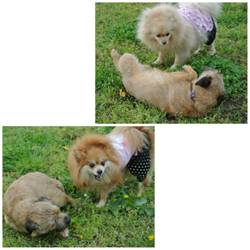 cats1_20120428225005.jpg