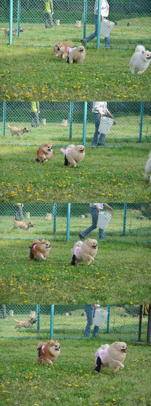 cats3_20120502223931.jpg