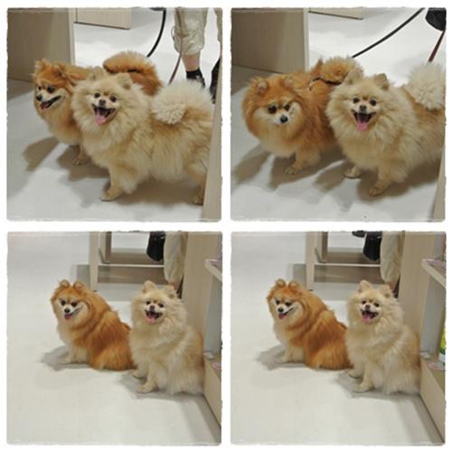cats3_20120624190713.jpg