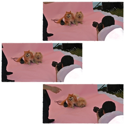 cats4_20120520153516.jpg