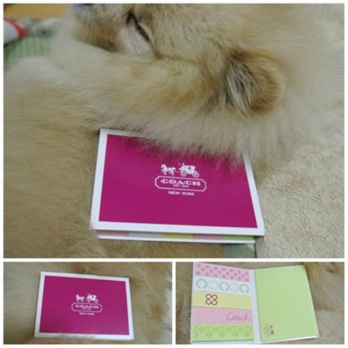 cats4_20120616220716.jpg